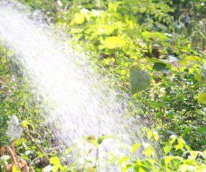 City watering schedule
